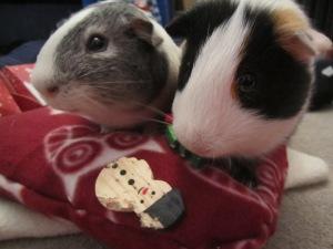 Basil and Buddy enjoying their new cushion!