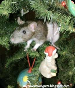 Nibblet The Rat