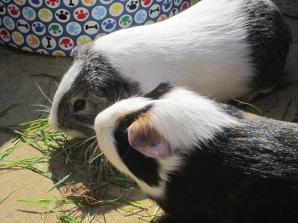 Buddy and Basil
