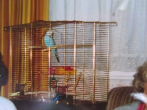 Barbie the budgie, passed away aged 4 after a mystery illness