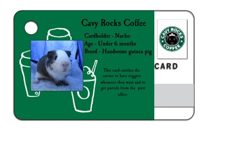 cavy rocks coffee