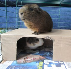 Nutty (RIP) & Nacho