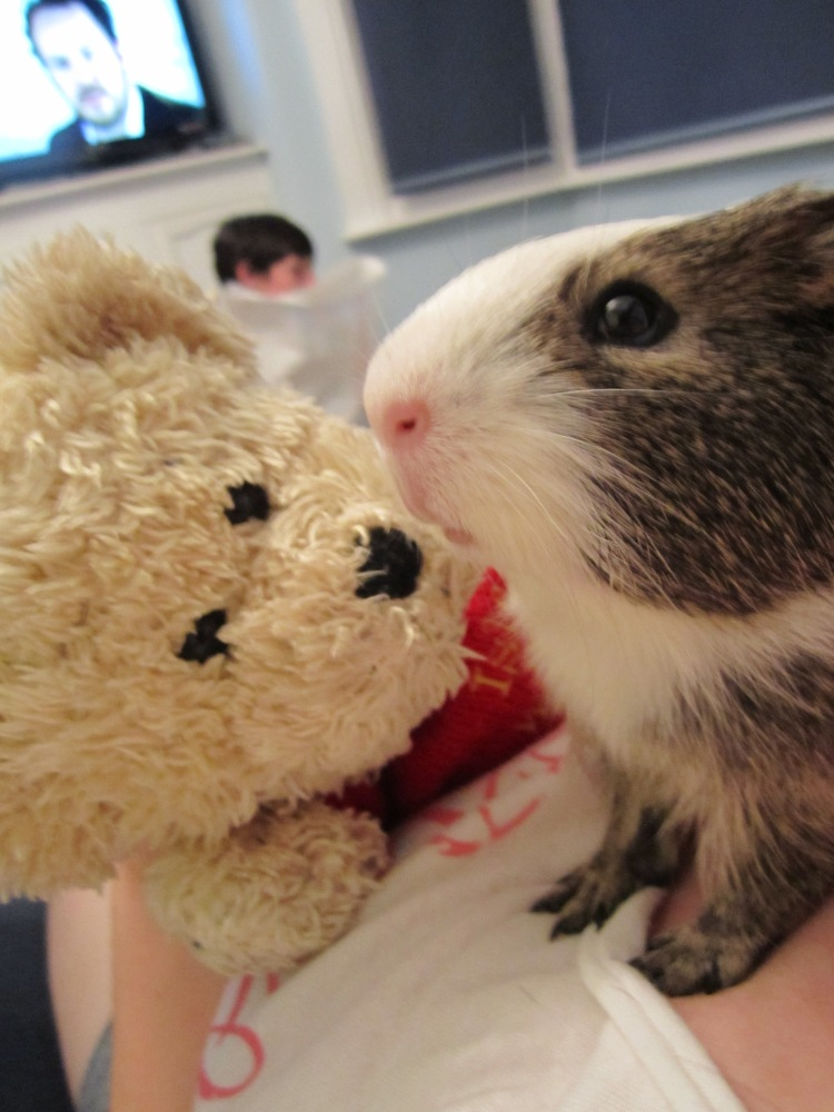 Guinea Pigs Do Grieve (And How You Can Help Your Piggy) (2/3)