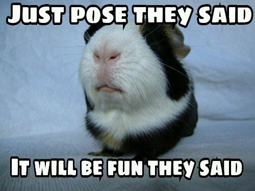Funny Meme Life : Monday memes hutch a good life