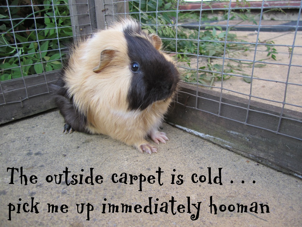 Wordless Wednesday - Cold Carpet! (1/2)